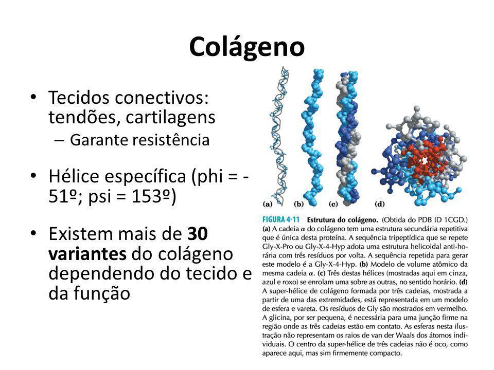 Colágeno Tecidos conectivos: tendões, cartilagens