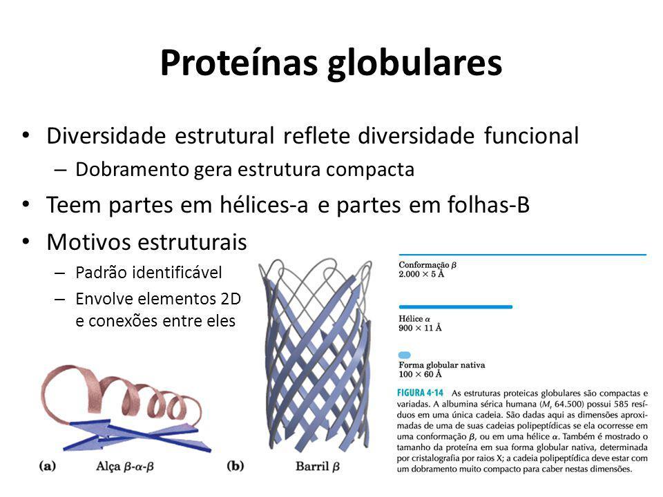 Proteínas globulares Diversidade estrutural reflete diversidade funcional. Dobramento gera estrutura compacta.