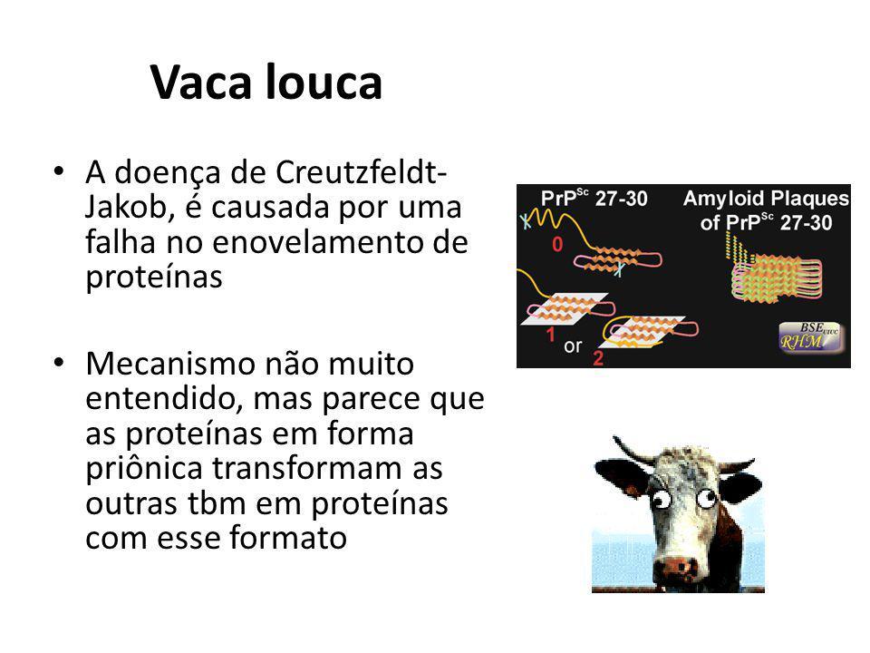 Vaca louca A doença de Creutzfeldt-Jakob, é causada por uma falha no enovelamento de proteínas.