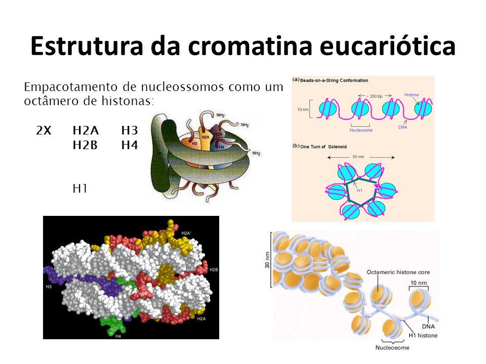 Estrutura da cromatina eucariótica