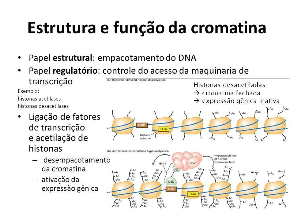 Estrutura e função da cromatina