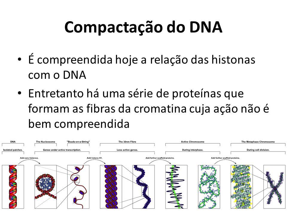 Compactação do DNA É compreendida hoje a relação das histonas com o DNA.