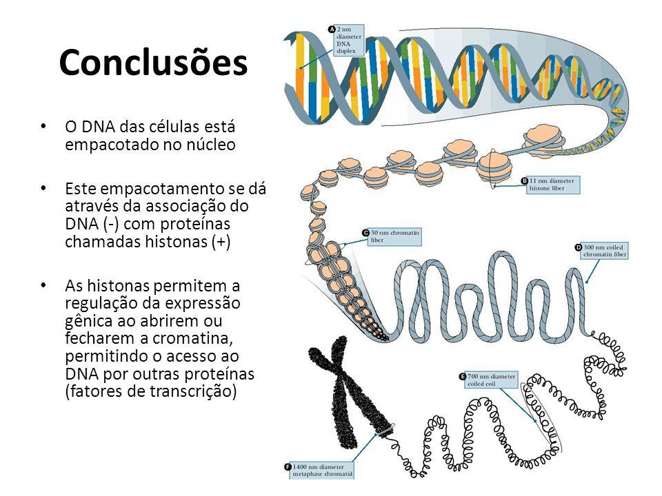 Conclusões O DNA das células está empacotado no núcleo