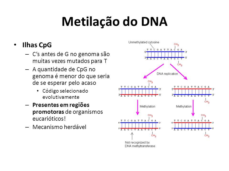 Metilação do DNA Ilhas CpG