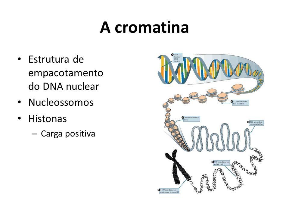 A cromatina Estrutura de empacotamento do DNA nuclear Nucleossomos