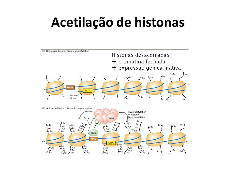 Acetilação de histonas
