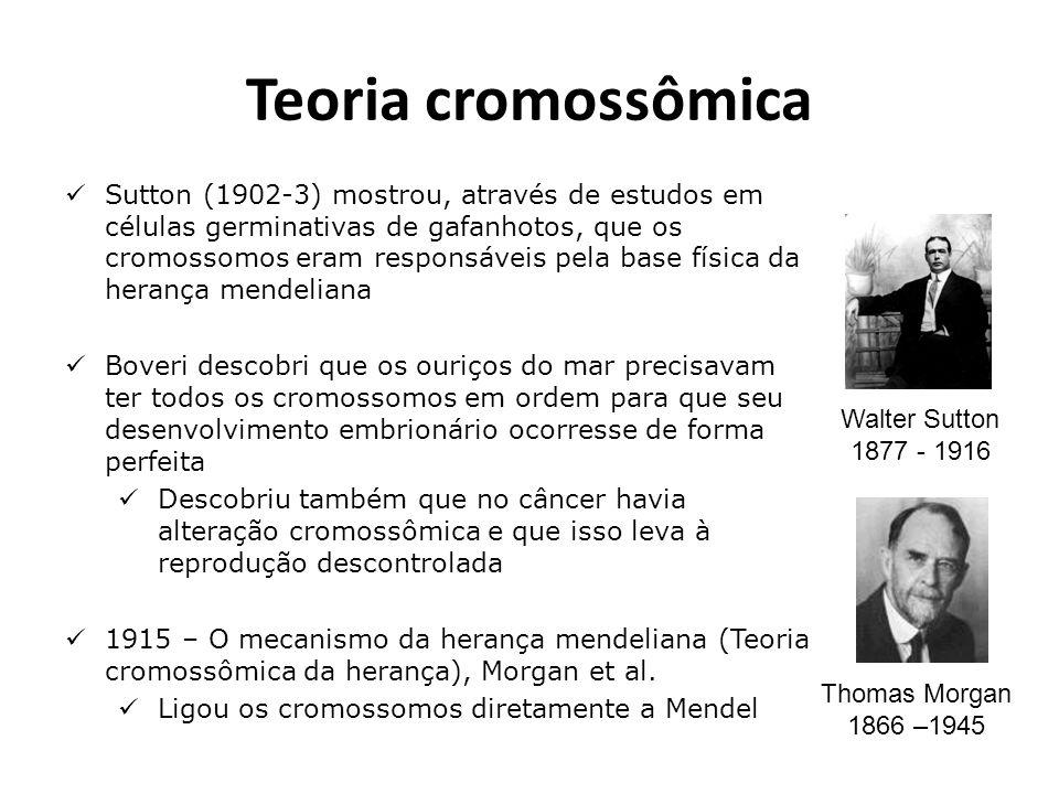 Teoria cromossômica
