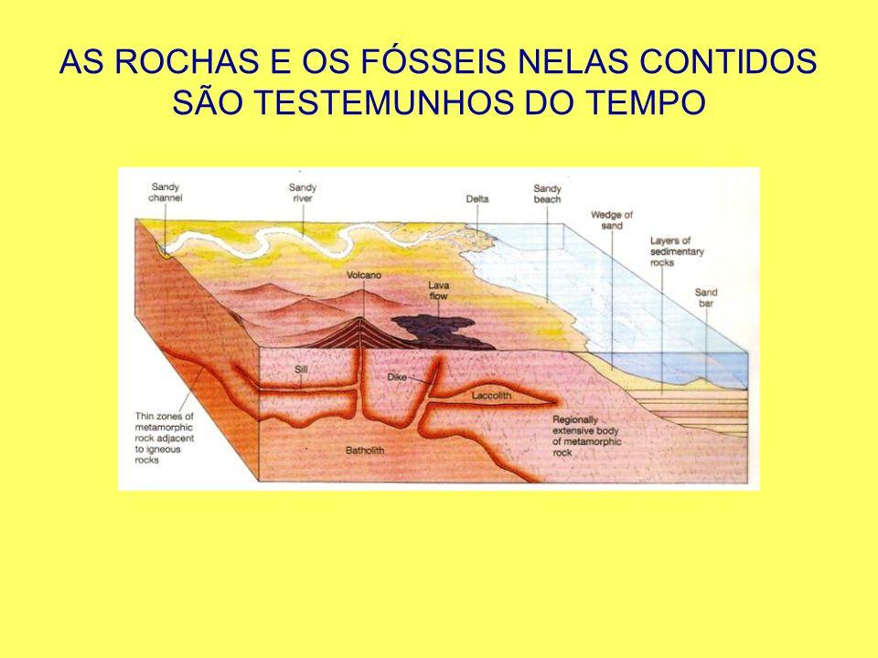 AS ROCHAS E OS FÓSSEIS NELAS CONTIDOS SÃO TESTEMUNHOS DO TEMPO