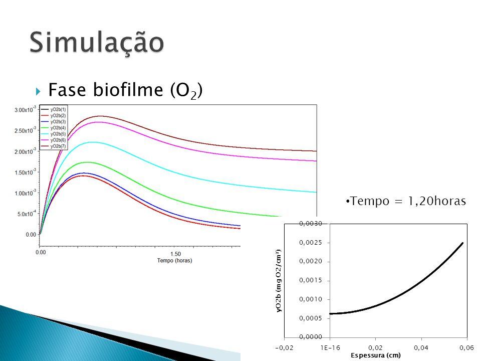 Simulação Fase biofilme (O2) Tempo = 1,20horas