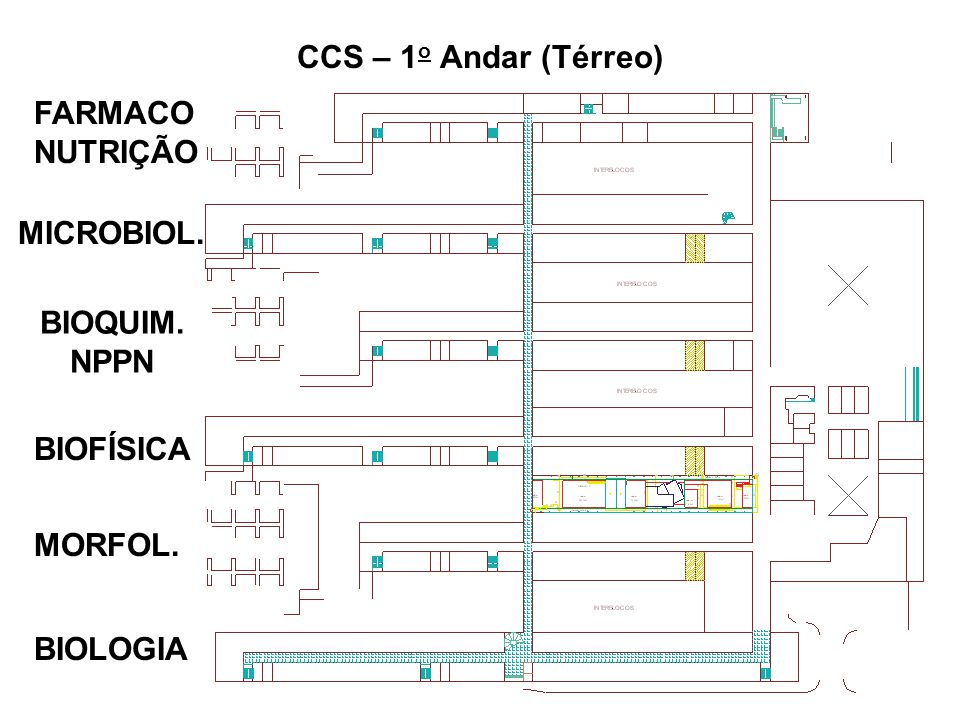 CCS – 1o Andar (Térreo) FARMACO NUTRIÇÃO MICROBIOL. BIOQUIM. NPPN BIOFÍSICA MORFOL. BIOLOGIA