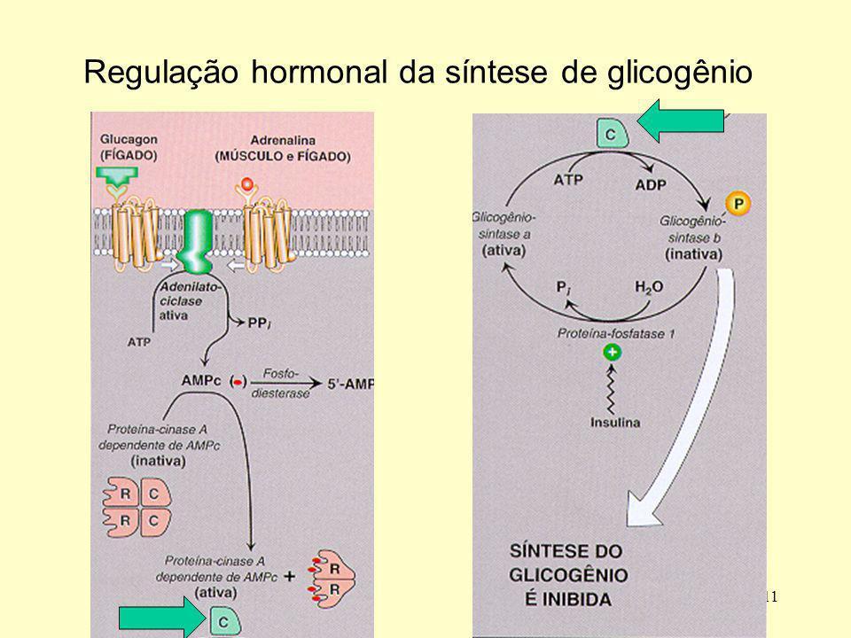 Regulação hormonal da síntese de glicogênio