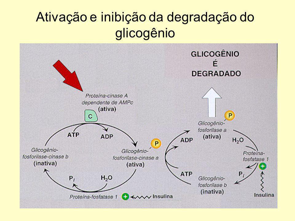 Ativação e inibição da degradação do glicogênio