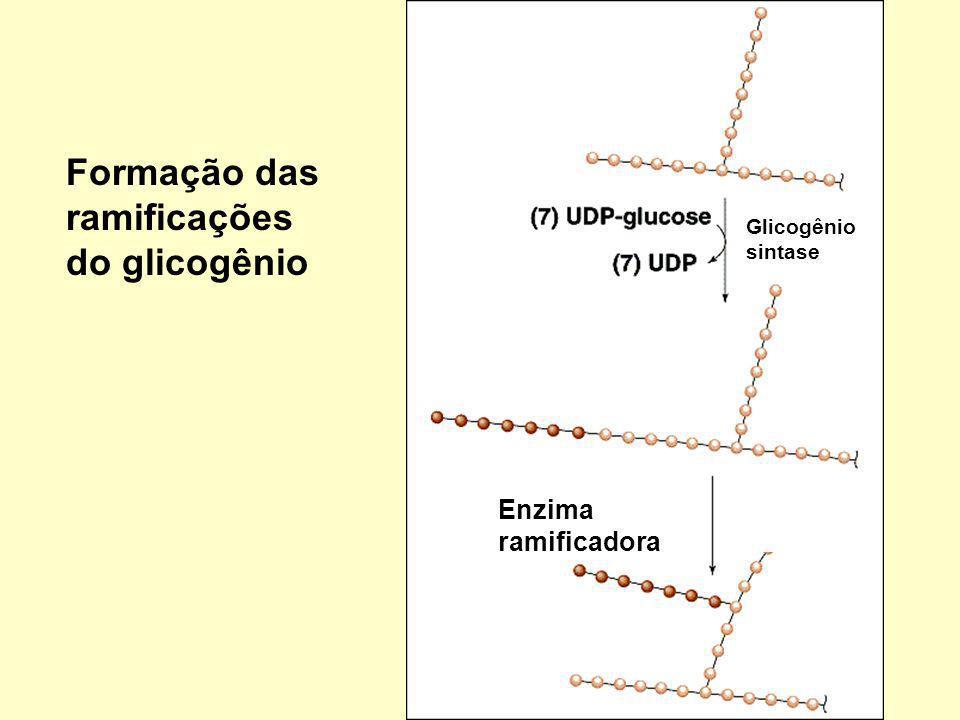 Formação das ramificações do glicogênio