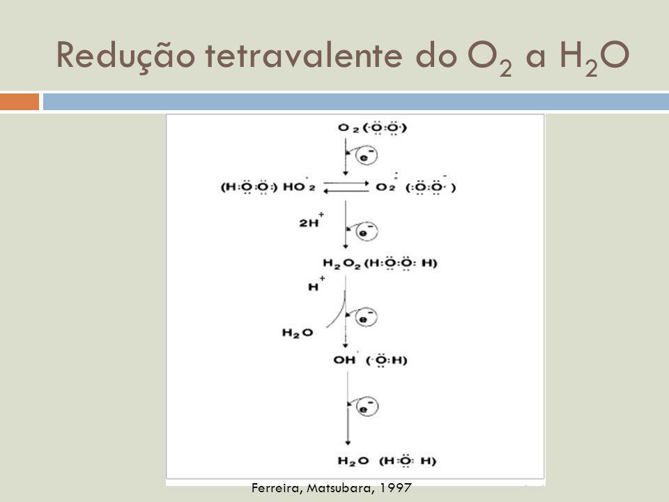 Redução tetravalente do O2 a H2O