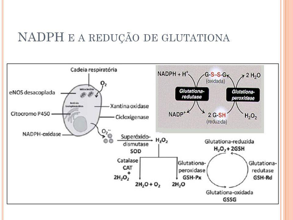 NADPH e a redução de glutationa
