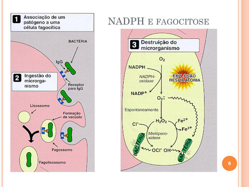 NADPH e fagocitose