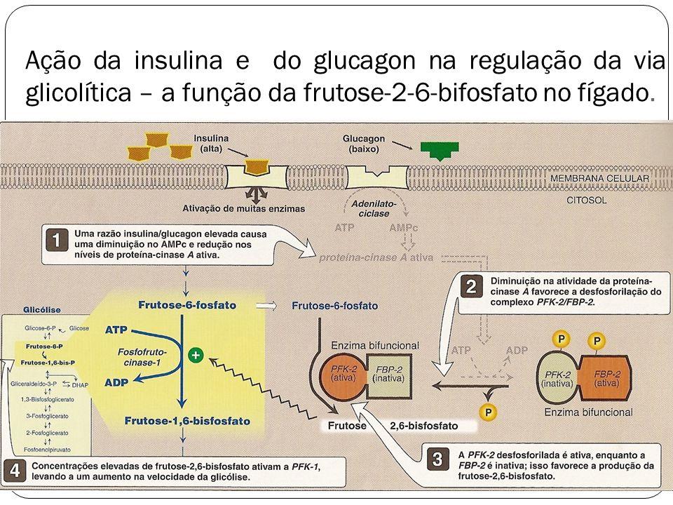 Ação da insulina e do glucagon na regulação da via glicolítica – a função da frutose-2-6-bifosfato no fígado.
