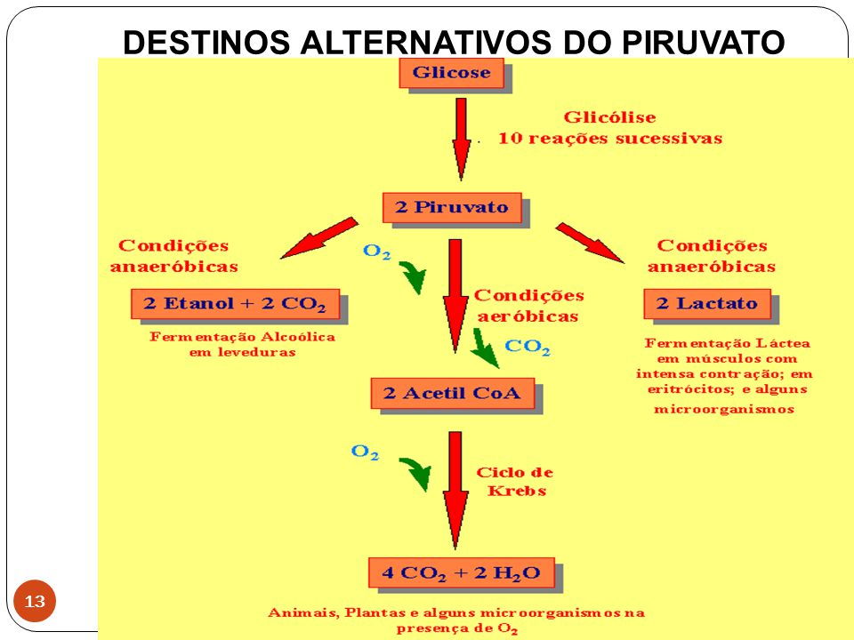 DESTINOS ALTERNATIVOS DO PIRUVATO