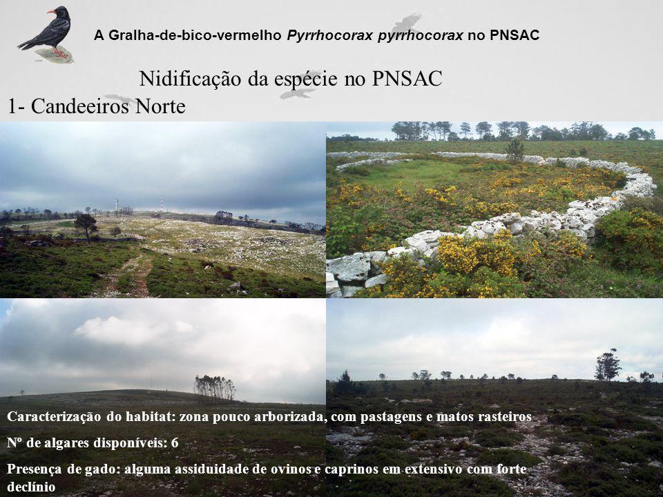 Nidificação da espécie no PNSAC 1- Candeeiros Norte