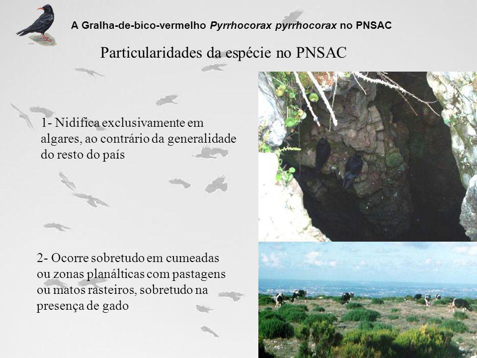 Particularidades da espécie no PNSAC