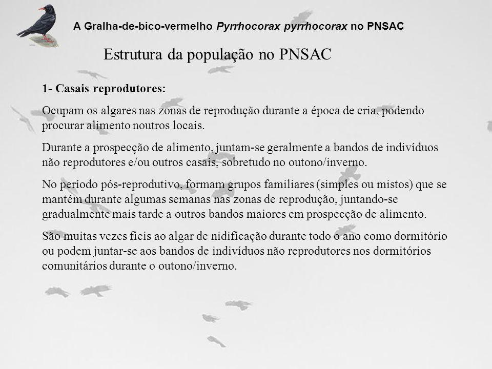 Estrutura da população no PNSAC