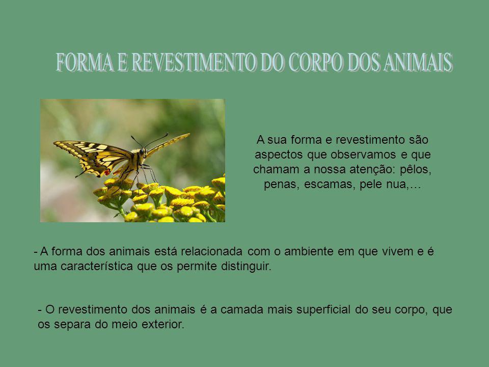 FORMA E REVESTIMENTO DO CORPO DOS ANIMAIS