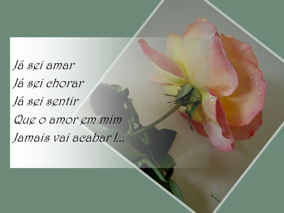 Já sei amar Já sei chorar Já sei sentir Que o amor em mim Jamais vai acabar !...