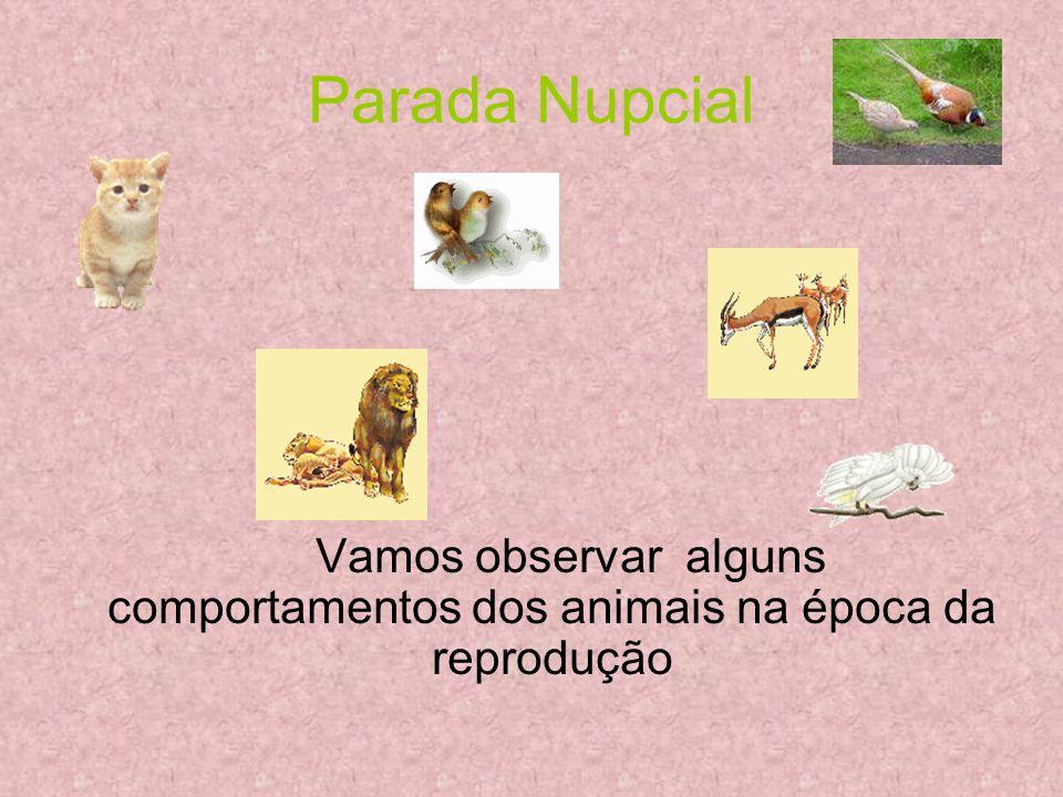 Parada Nupcial Vamos observar alguns comportamentos dos animais na época da reprodução
