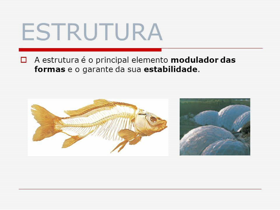 ESTRUTURA A estrutura é o principal elemento modulador das formas e o garante da sua estabilidade.