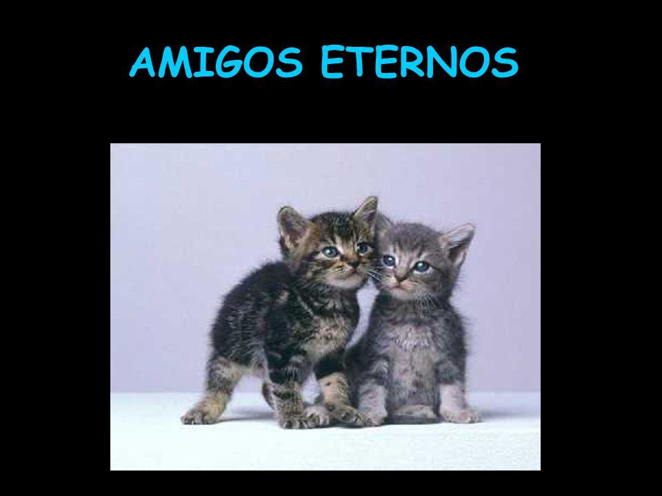 AMIGOS ETERNOS