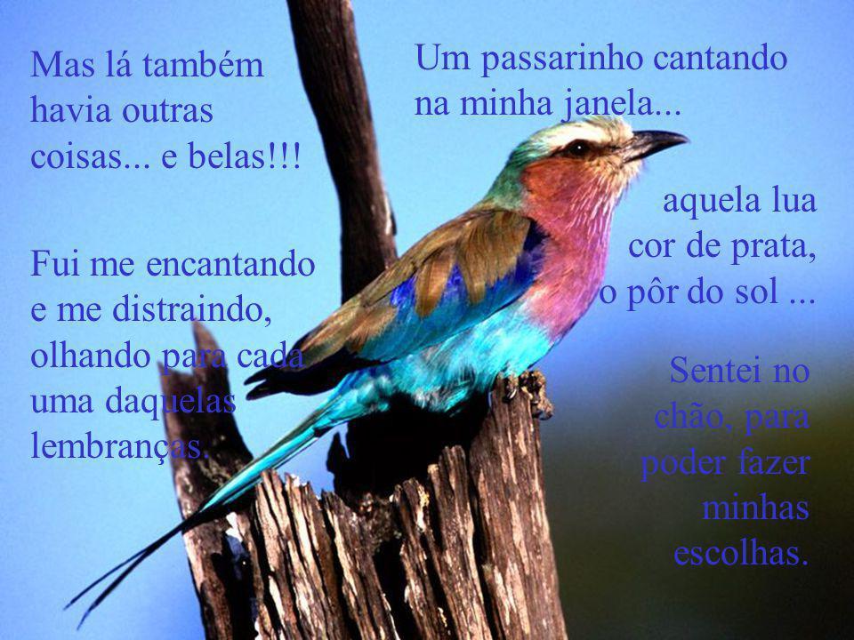 Um passarinho cantando na minha janela...