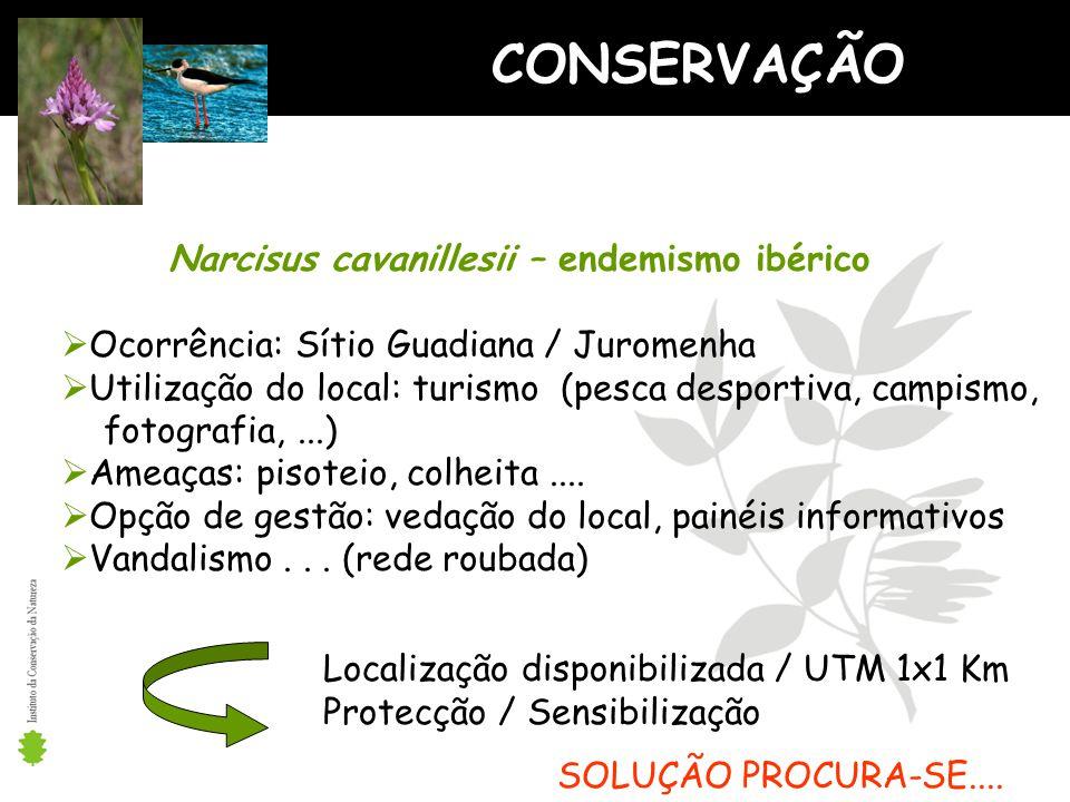 CONSERVAÇÃO Narcisus cavanillesii – endemismo ibérico