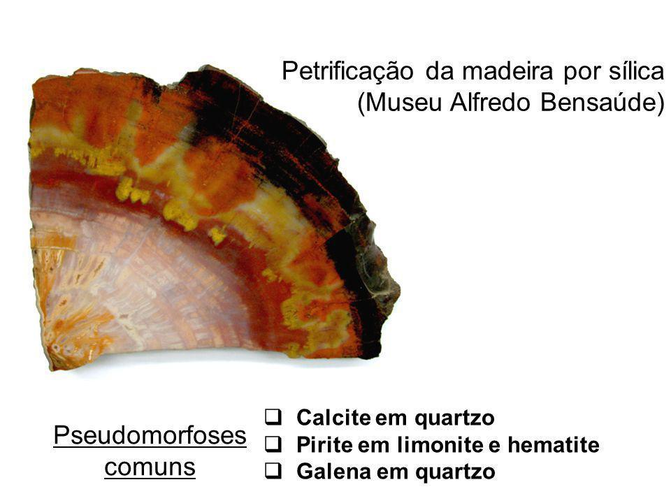 Petrificação da madeira por sílica (Museu Alfredo Bensaúde)
