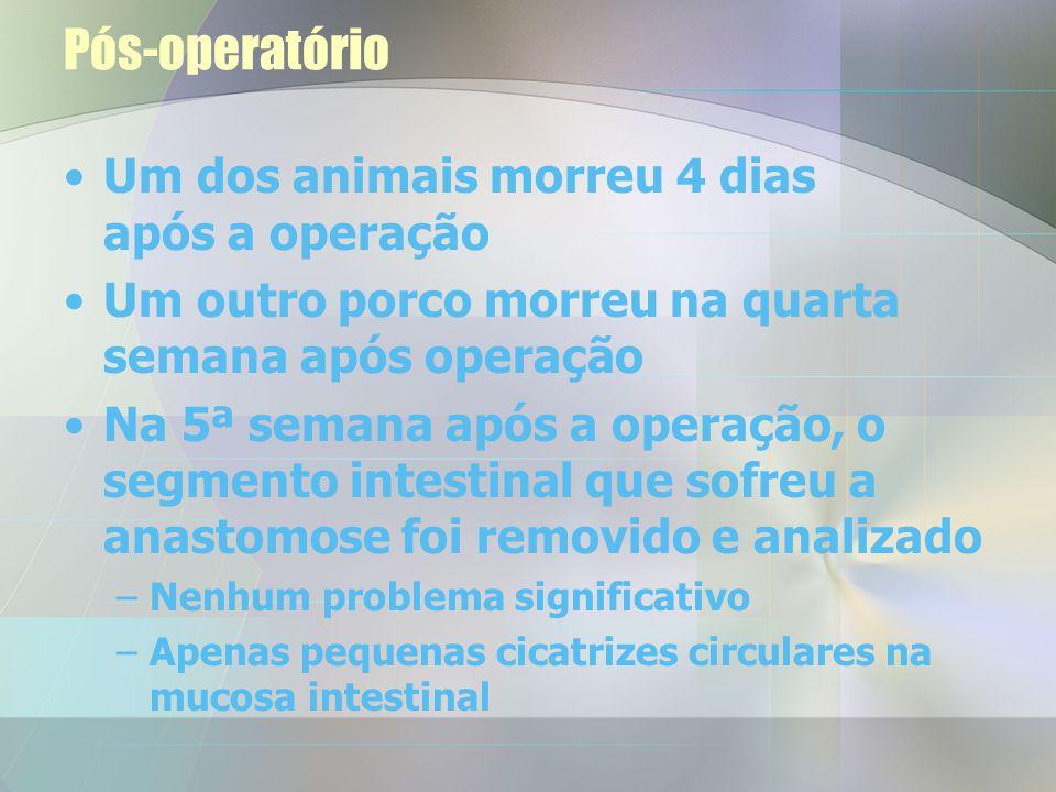 Pós-operatório Um dos animais morreu 4 dias após a operação