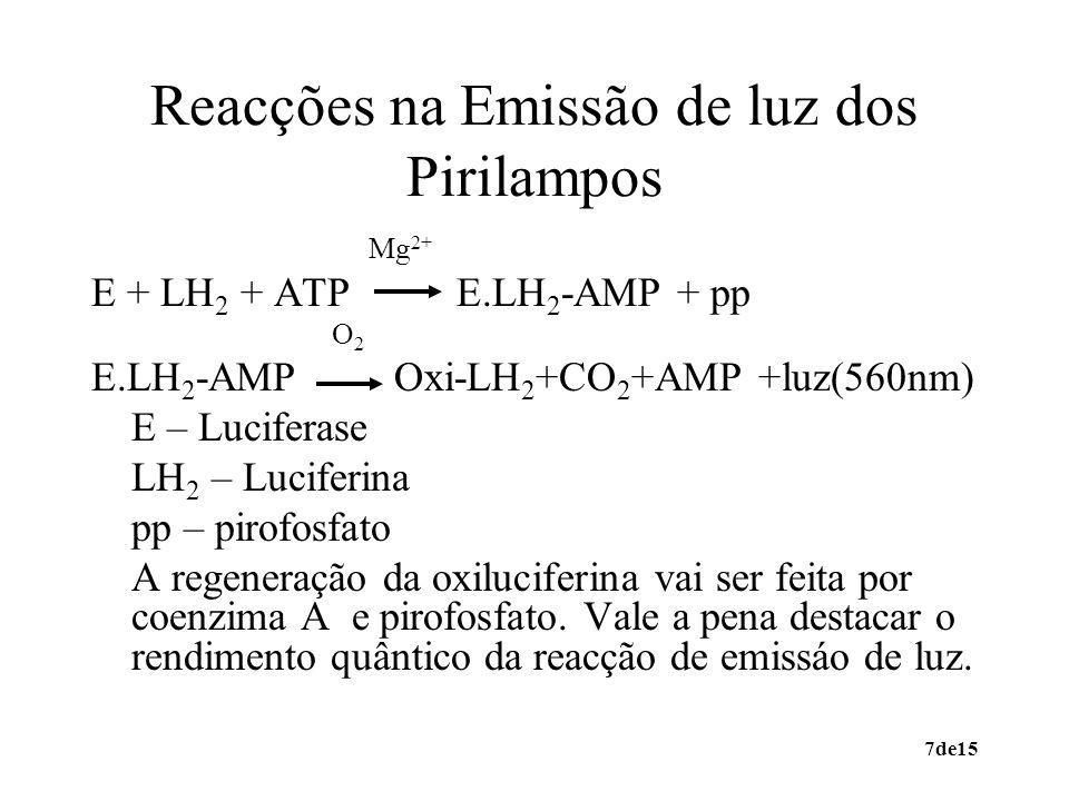 Reacções na Emissão de luz dos Pirilampos
