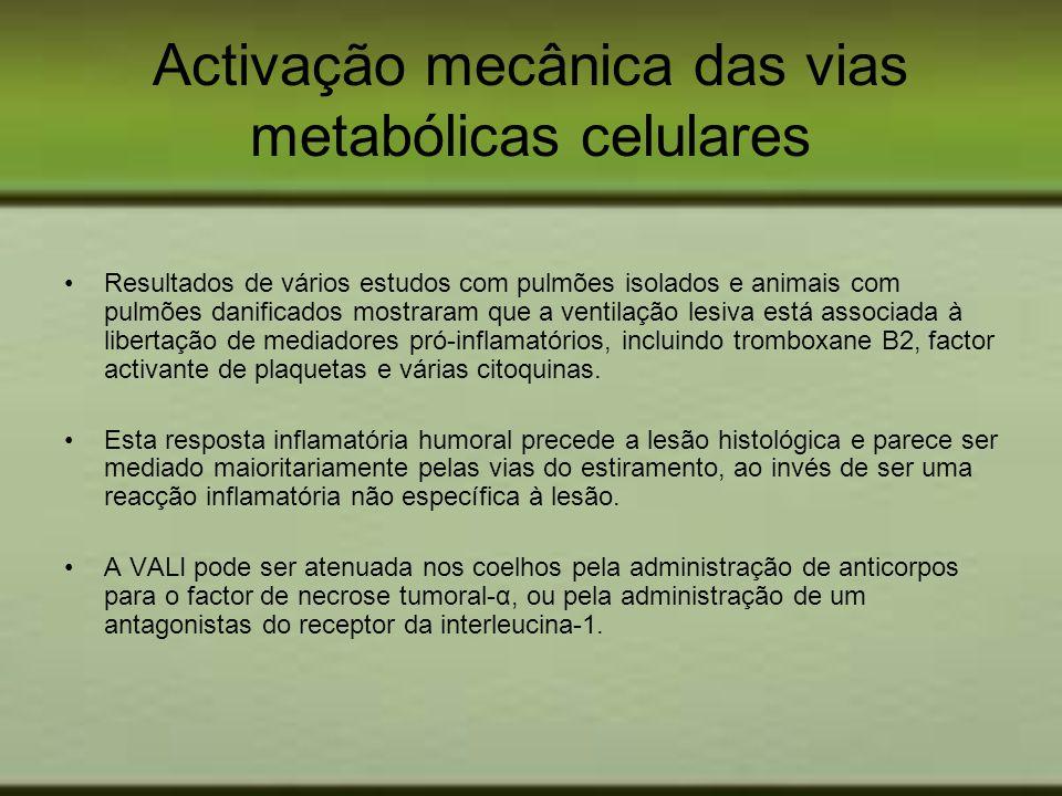 Activação mecânica das vias metabólicas celulares