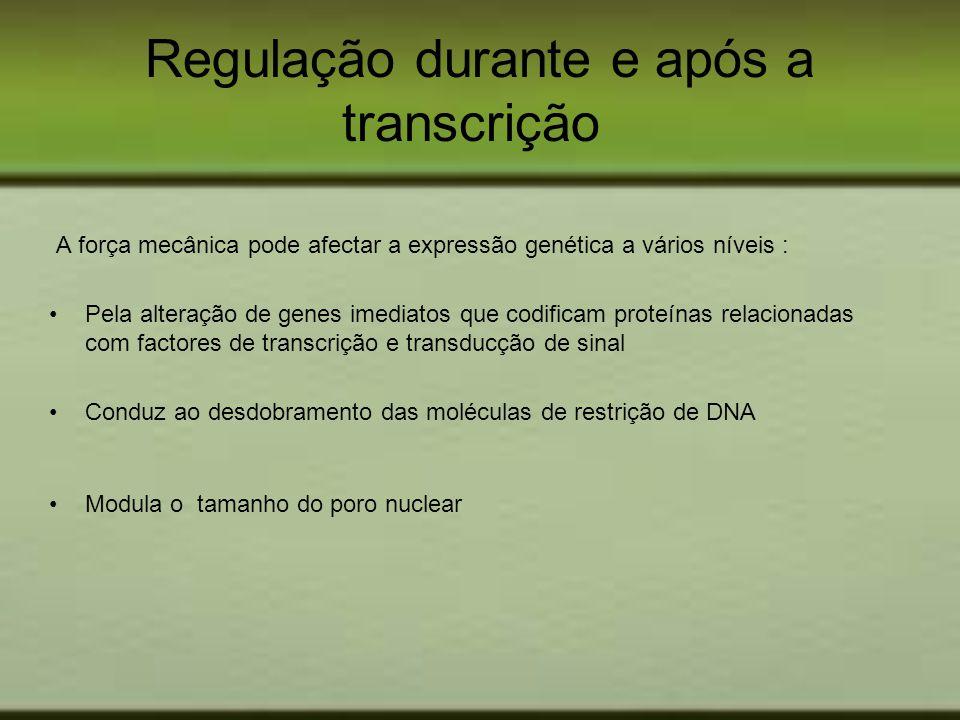 Regulação durante e após a transcrição
