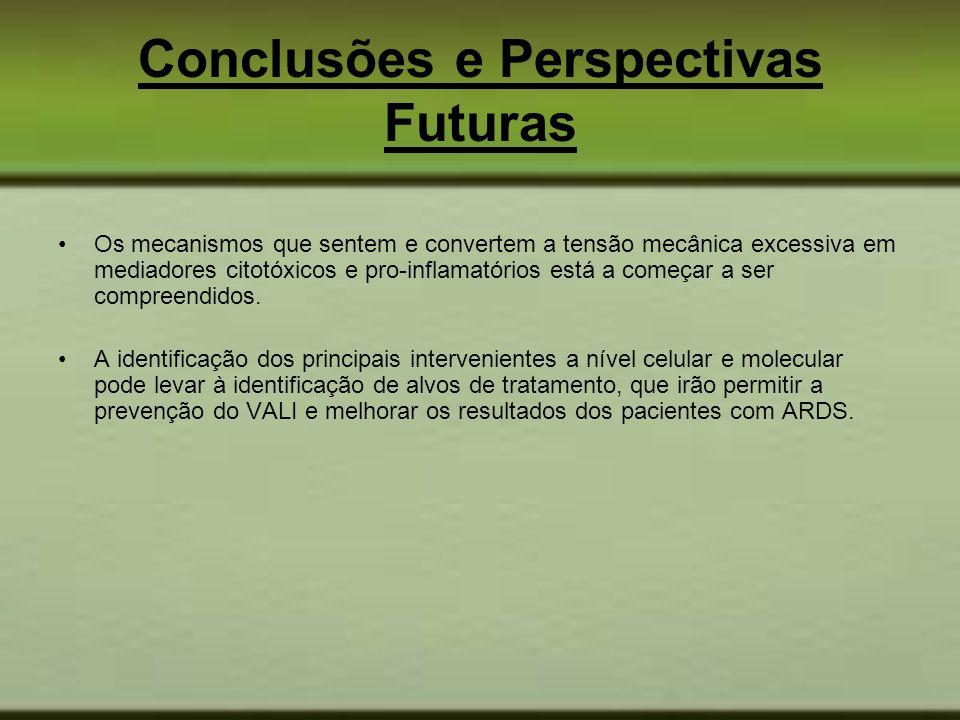 Conclusões e Perspectivas Futuras