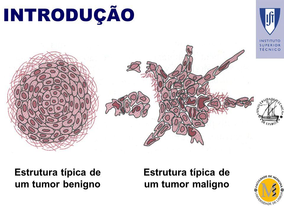INTRODUÇÃO Estrutura típica de um tumor benigno