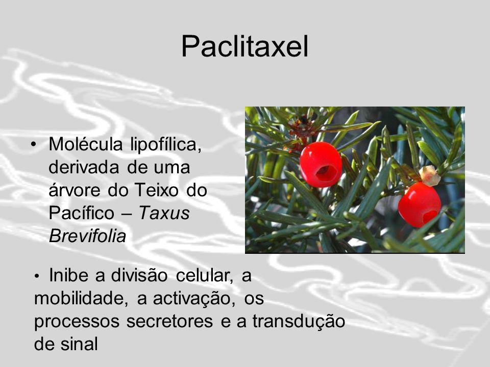 Paclitaxel Molécula lipofílica, derivada de uma árvore do Teixo do Pacífico – Taxus Brevifolia.