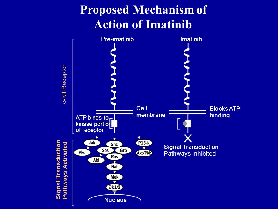 Proposed Mechanism of Action of Imatinib