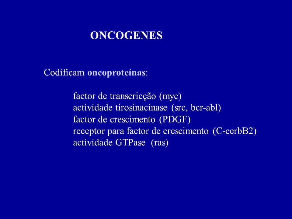 ONCOGENES Codificam oncoproteínas: factor de transcricção (myc)