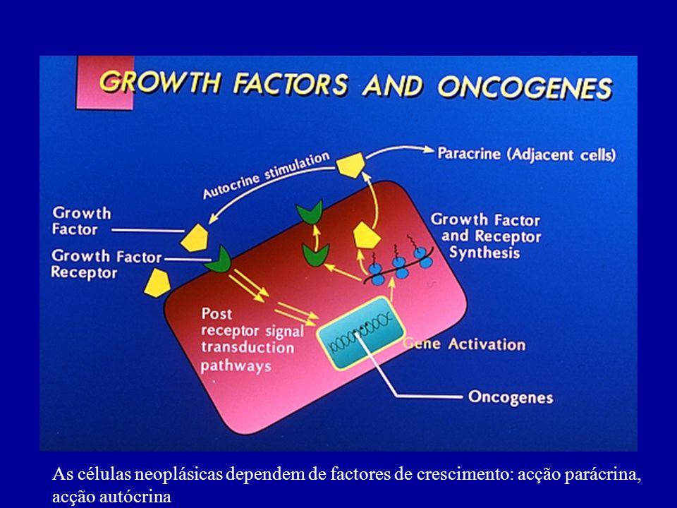 As células neoplásicas dependem de factores de crescimento: acção parácrina,