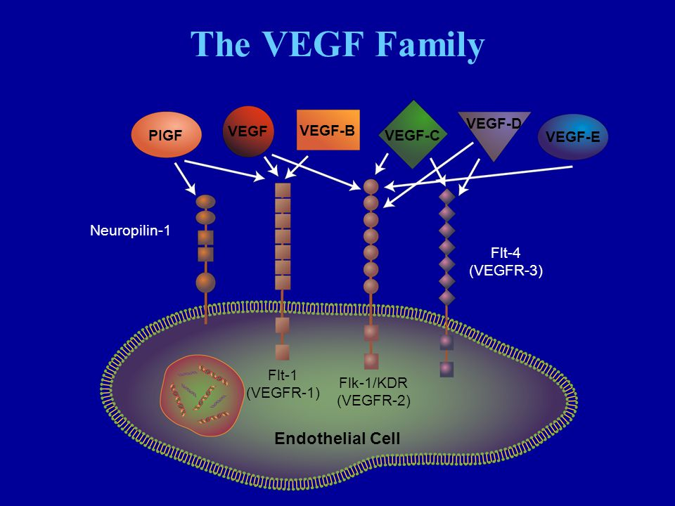 The VEGF Family Endothelial Cell VEGF-D VEGF VEGF-B PIGF VEGF-C VEGF-E