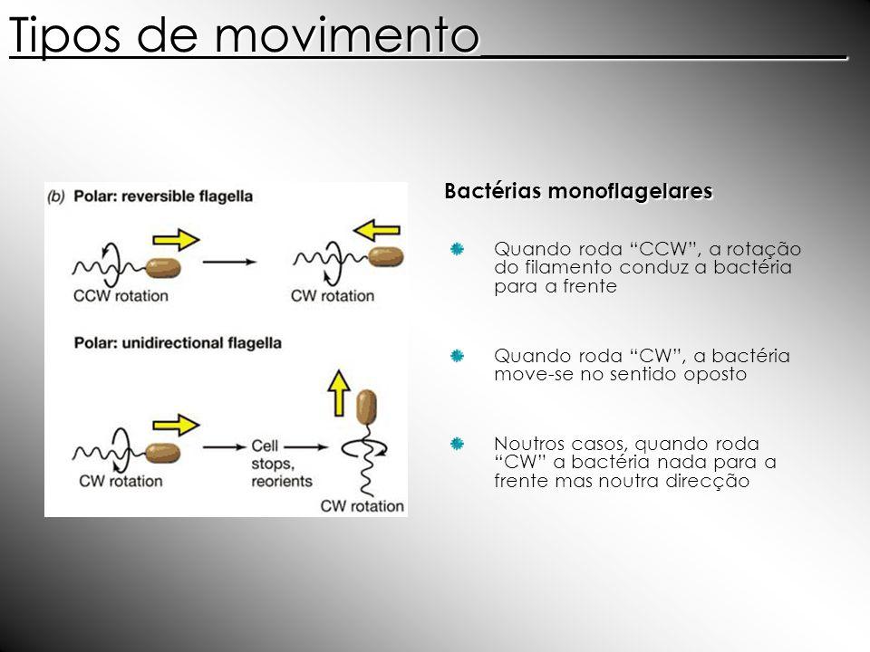 Bactérias monoflagelares