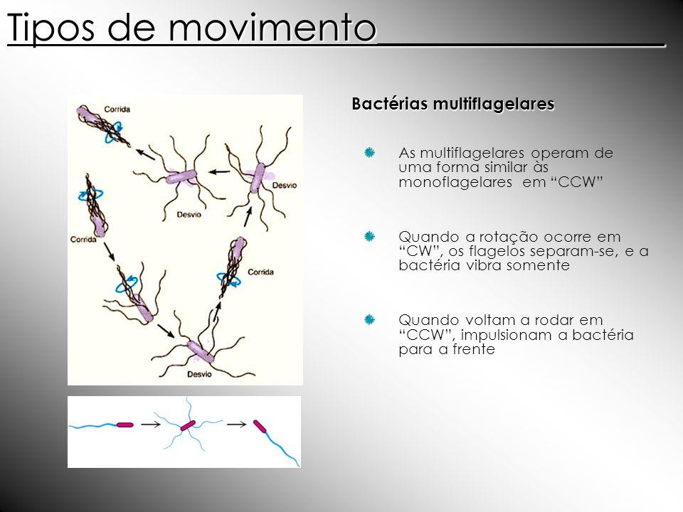 Bactérias multiflagelares