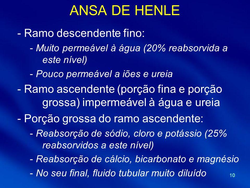 ANSA DE HENLE Ramo descendente fino: