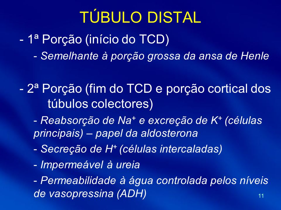 TÚBULO DISTAL 1ª Porção (início do TCD)