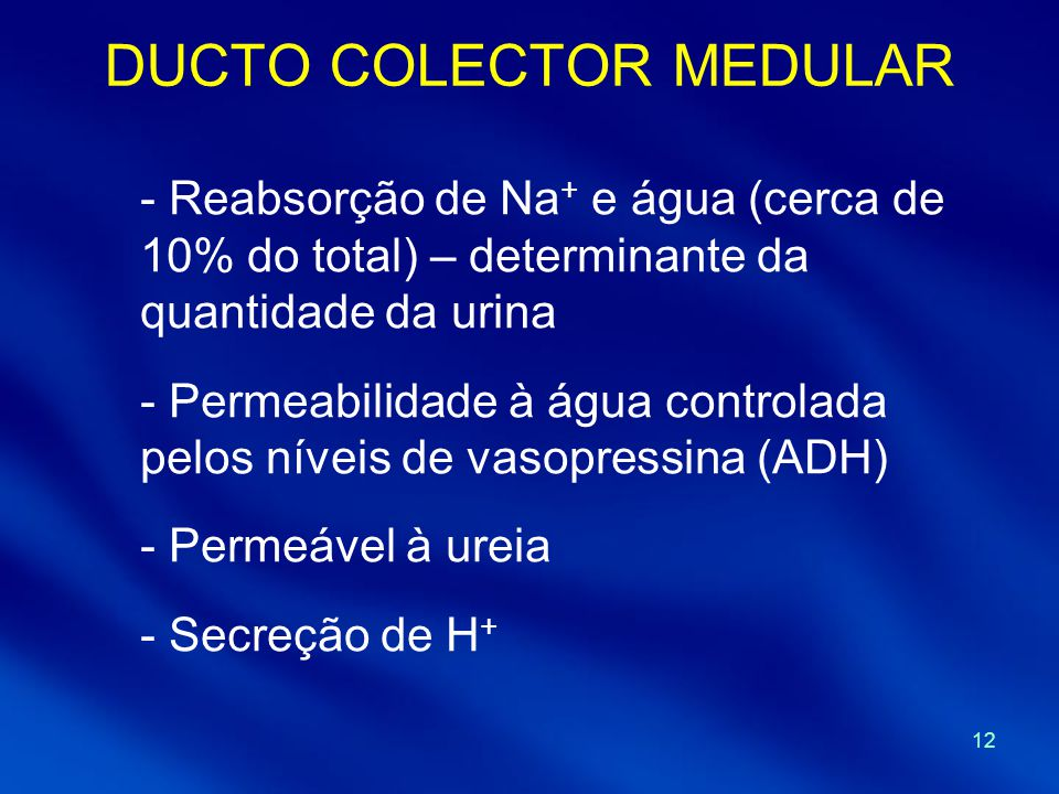 DUCTO COLECTOR MEDULAR