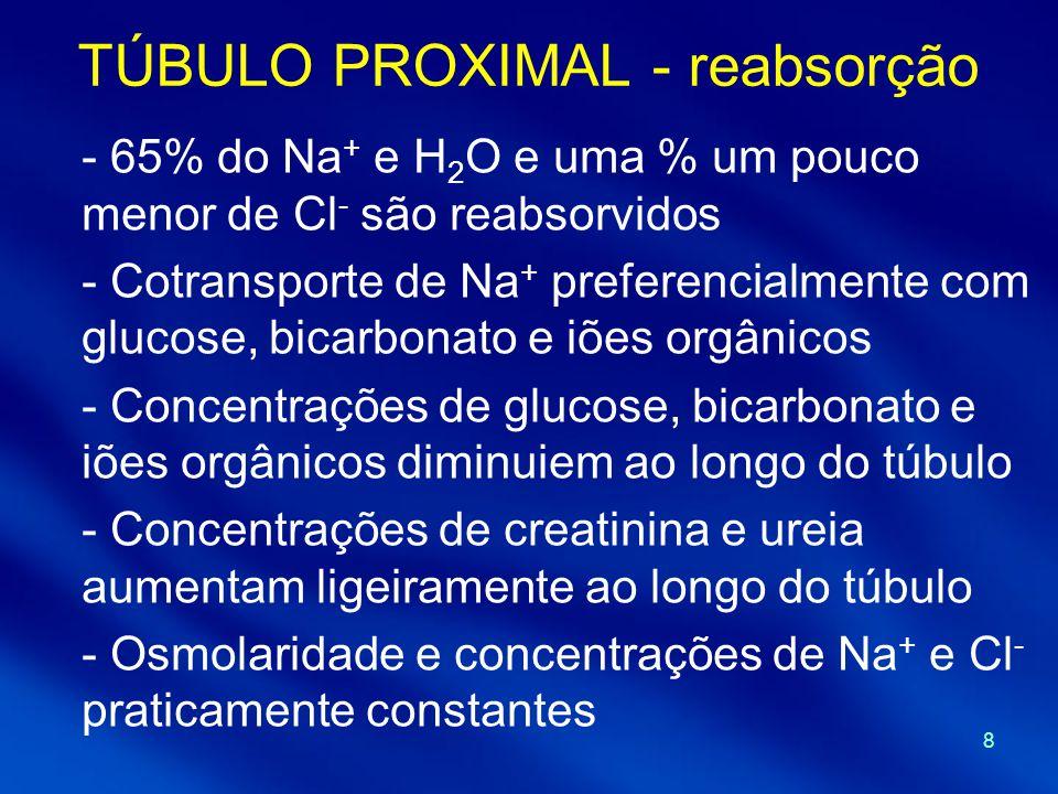 TÚBULO PROXIMAL - reabsorção